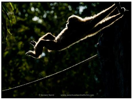 Animalism (11)