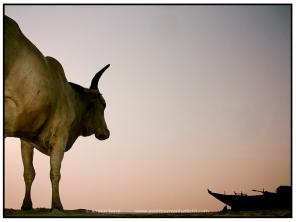 Animalism (3)