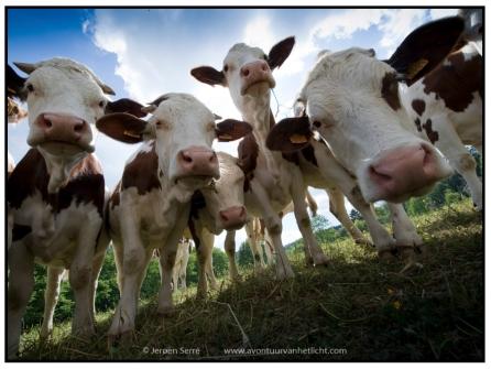 Animalism (6)