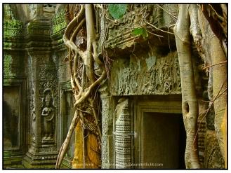 Cambodia (11)