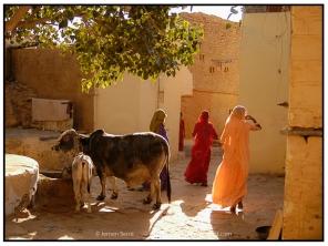 India (8)