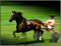 snelle paarden-1