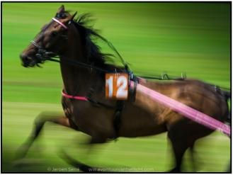 snelle paarden-2