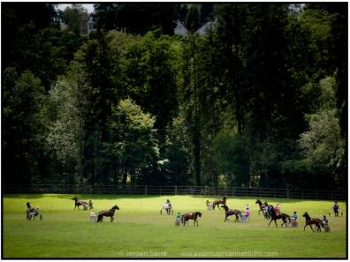 snelle paarden-3
